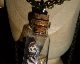 Shells in a bottle necklace