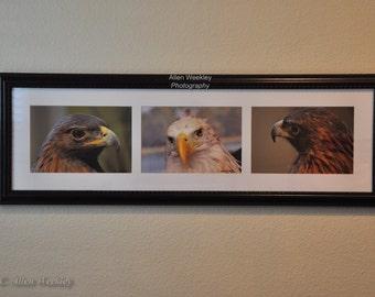 Three Eagles Framed Photo