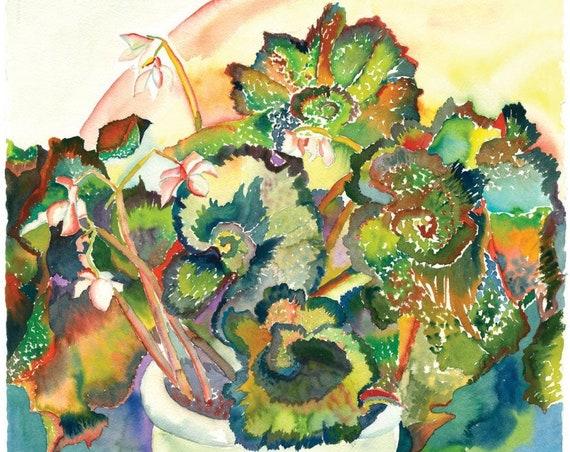 Begonia Spirals - Giclee Print by Helen Yamada