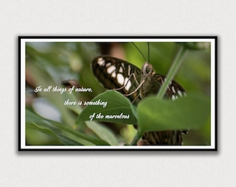 Marvelous Nature Butterfly Saying, Frame TV Digital Art