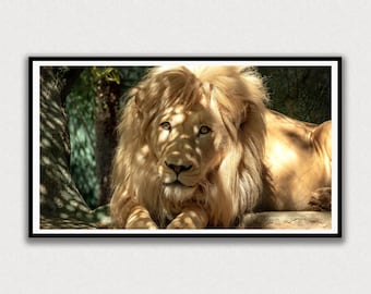 Lion Laying in the Shade Frame TV Digital Art