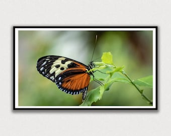 Butterfly Close-up Frame TV Digital Art
