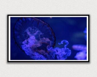 Jellyfish in Dark Water Frame TV Digital Art