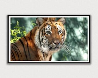Tiger Eyes Frame TV Digital Art