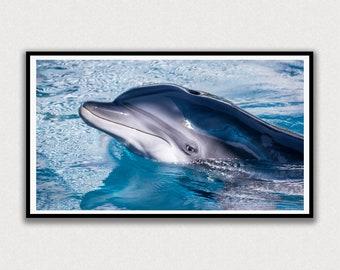 Dolphin Face Frame TV Digital Art