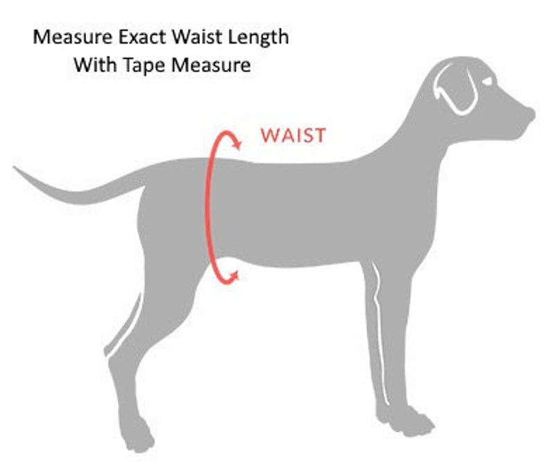 Male Dog Belly Band Diaper for Marking Graffiti Scratch Teal Incontinence w PUL /& All-in-One Options