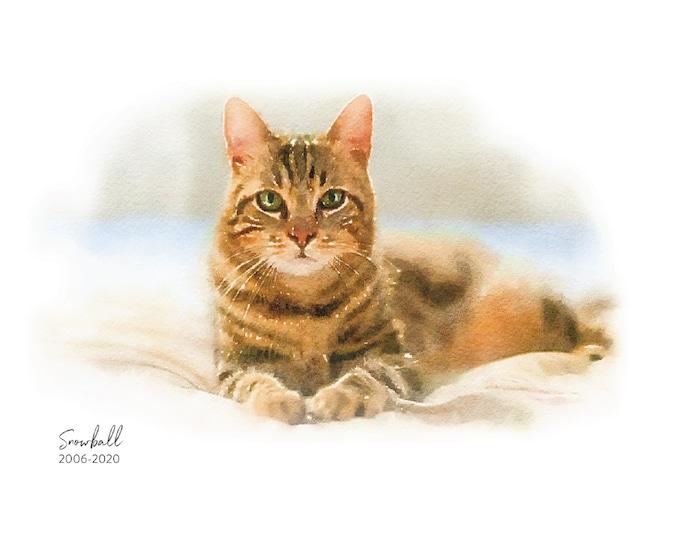 Custom Pet Watercolor Art Print   Dog Cat Illustration   Art Print