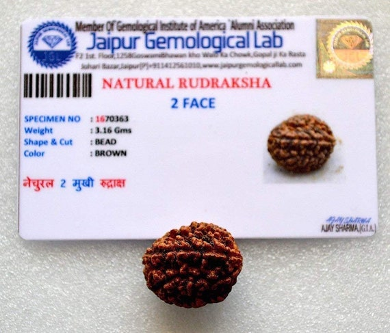 2 Mukhi Rudraksha with COA - Two Face Rudraksha 2 Face Rudraksh bead - From Nepal - Lab Certified - Stress free life Meditation Yoga jewelry