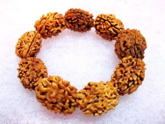 Genuine 3 mukhi rudraksha, 3 face rudraksha, 3 mukhi rudraksh, chakra bracelet, healing protection bracelet, Nepal Rudraksha, seed bracelet