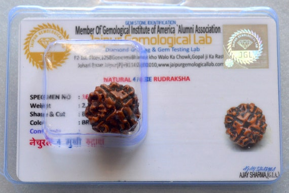 4 Mukhi Rudraksha - Four Face Rudraksha 4 Face Rudraksh bead - From Nepal - Lab Certified - Stress free life - Om Meditation Yoga jewelry