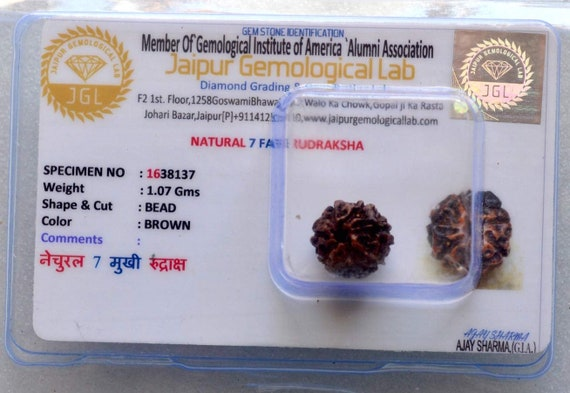 7 Mukhi Rudraksha -Seven Face Rudraksha 7 Face Rudraksh bead - From Nepal - Lab Certified - Stress free life - Om Meditation Yoga jewelry
