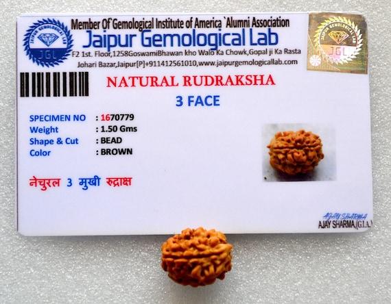 Genuine 3 mukhi rudraksha with COA 3 face rudraksha, 3 mukhi rudraksh, chakra bracelet, healing protection, Nepal RudrakshaChristmas