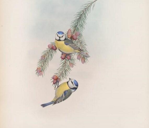 Wall Hanging Artwork Home Furnishing Pretty Birds Digital Downloads Home Decor Heron Bird Print by John Gould