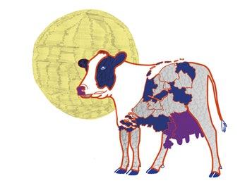 Postcard - Dutch Cow