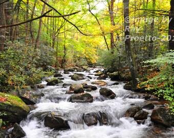 Jones River Rapids
