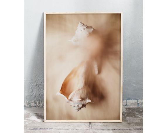 Photography art digital download of sea shells. Natural tones printable wall art.