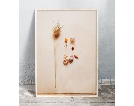 Photography art digital download of dried flowers and small sea shells. Natural tones printable wall art.