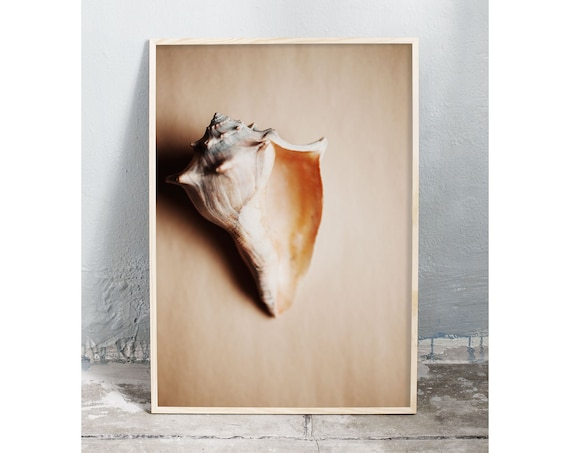 Photography art digital download of a sea shell. Natural tones printable wall art.