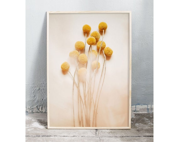 Photography art digital download of yellow billy balls. Natural tones printable wall art.