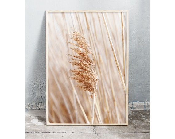 Photography art digital download of reed grass. Natural tones printable wall art.