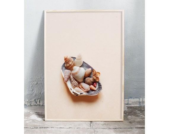 Photography art digital download of collection of sea shells. Natural tones printable wall art.