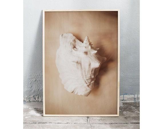 Photography art digital download of a sea shell. Natural tones printable wall art.