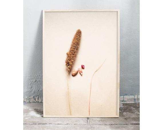 Photography art digital download of dried grass and small sea shells. Natural tones printable wall art.