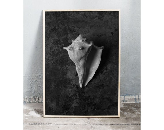 Downloadable digital art photography of a sea shell in black and white