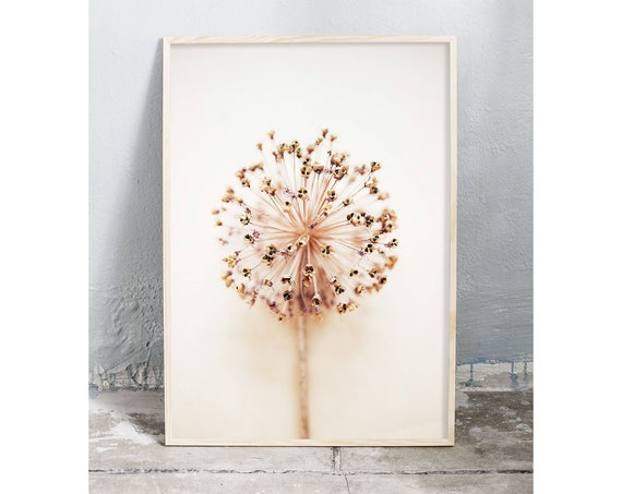 Photography art digital download of dried allium flower. Natural tones printable wall art.