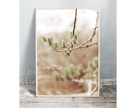 Photography art digital download of branches of the sallow tree in the springtime. Natural tones printable wall art.