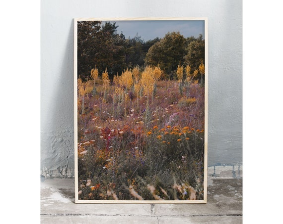Photography art print of wild growing summer flowers on Gotland, Sweden. Printed on a high quality, matte paper.
