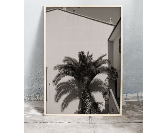 Black and white digital downloadable photo of palm tree in Italy.