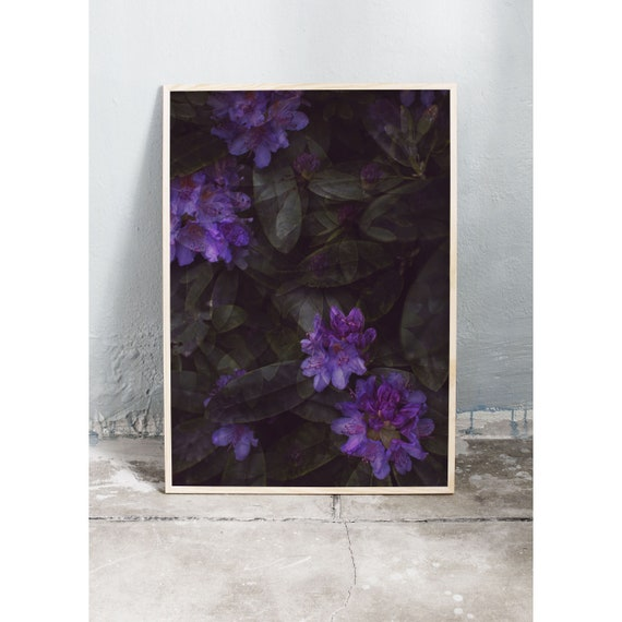 Photography Print, Purple Rhododendron, Wall Art, Nature Art, Flower Print, Purple, Nature Print, Garden Wall Art, Art Print, Flowers