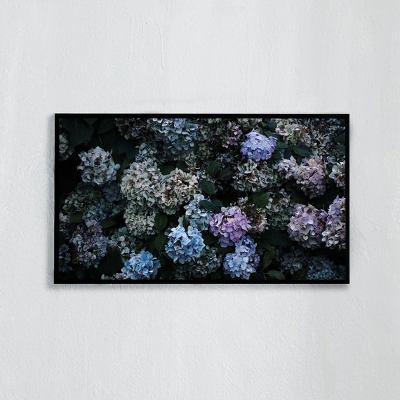 Frame TV Art, Digital downloadable art photography, Art photo of purple and blue hydrangeas, Art for digital TV