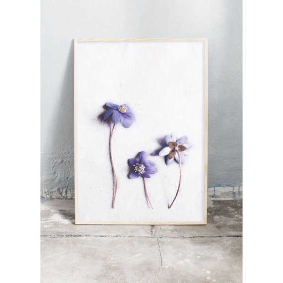 Photography Print, Art, Hepatica, Wall Art, Nature Art, Flower Print, Purple, Nature Print, Garden Wall Art, Art Print, Flowers