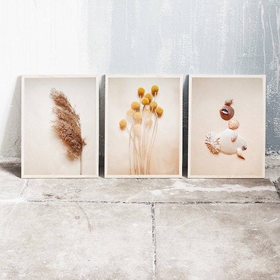 Set of 3 downloadable and printable photography prints, natural tones wall art, reed grass, billy balls and sea shell still life.