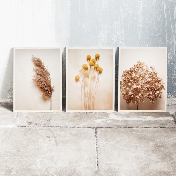 Set of 3 downloadable and printable photography prints, natural tones wall art, reed grass, billy balls and dried hydrangea