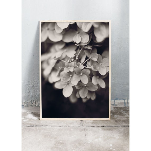 Digital downloadable art photography of the hydrangea flower in black and white