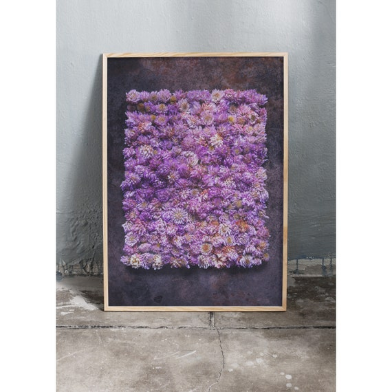 Photography art print of purple wild clove flowers. Print is printed on a high quality paper and a limited edition of the largest format.
