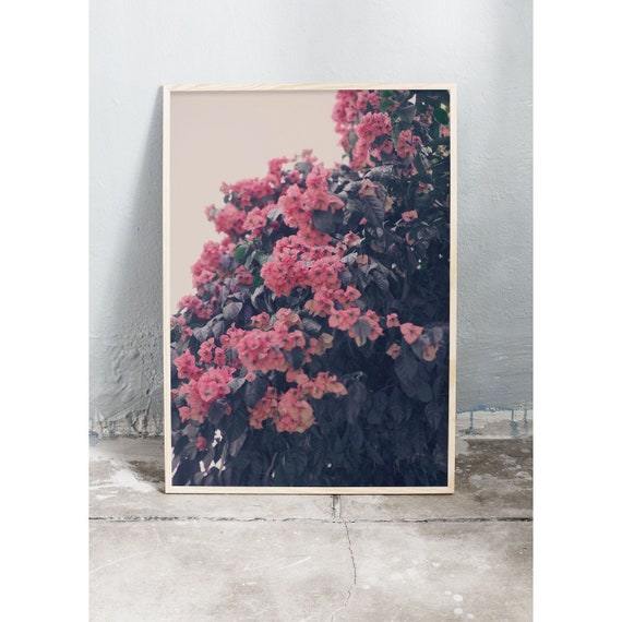 Photography art print of pink bougainvillea in Italy. Print is printed on a high quality, matte paper.