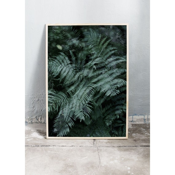 Photography Print, Fern in the Woods, Wall Art, Nature Art, Fern Print, Green, Nature Print, Forest Wall Art, Art Print, Soft, Leaves