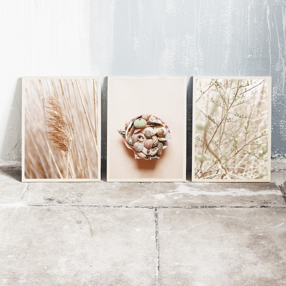 Set of 3 downloadable and printable photography prints, natural tones wall art, reed grass, sea shell still life and the sallow tree.