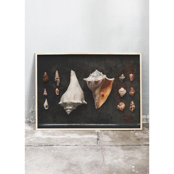 Photography art digital download of collection of sea shells. Printable wall art.