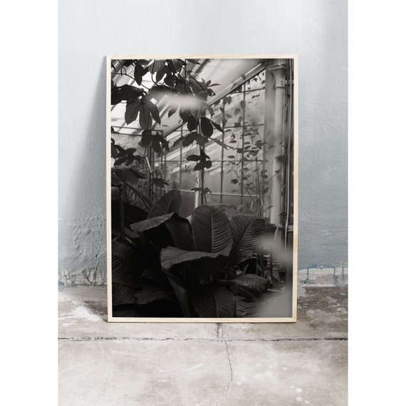 Black and white digital downloadable photo from the green house in the botanical garden in Copenhagen.