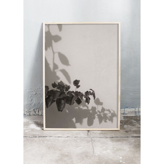 Black and white digital downloadable photo of bougainvillea in Greece.