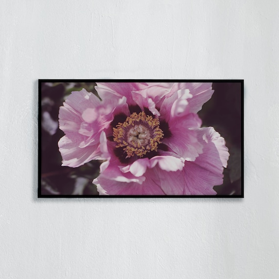 Frame TV Art, Digital downloadable art photography, Photo art of pink peony, Art for digital TV