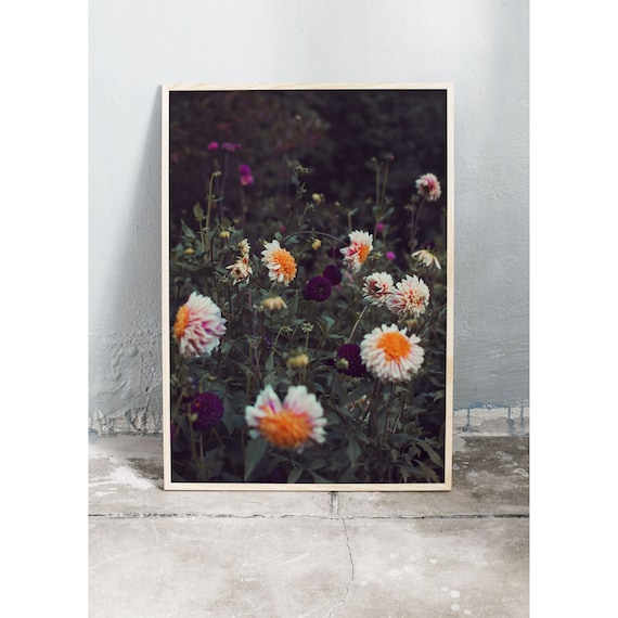 Photography Print, Dahlia, Wall Art, Nature Art, Flower Print, Pink, Orange, Nature Print, Garden Wall Art, Art Print, Flowers, Blossoms