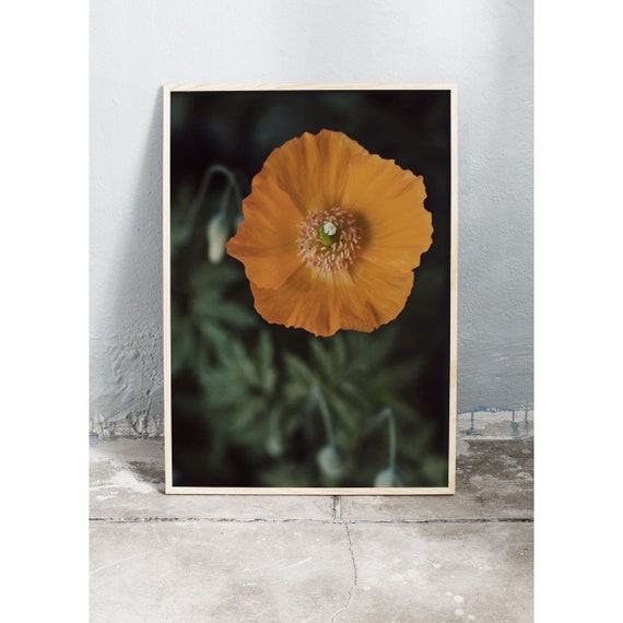 Photography Print, Orange Poppy, Wall Art, Nature Art, Flower Print, Yellow, Nature Print, Floral Wall Art, Art Print, Flowers