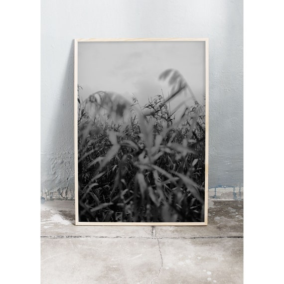Digital downloadable art photography in black and white of common read in nature