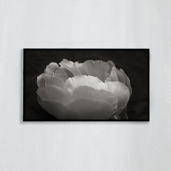 Frame TV Art, Digital downloadable TV art photography, Black and white photography of a white peony, Art for digital
